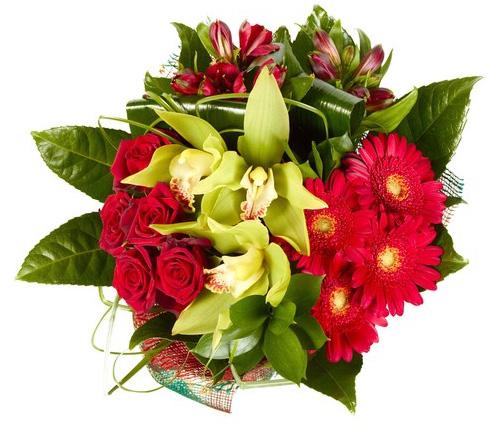 L orchidea sa parlar d amore wineflowers blog for Donare un giardiniere