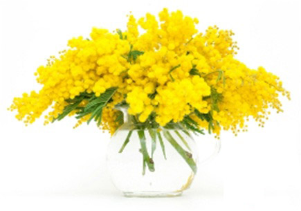 Mazzo Di Fiori Mimosa.March 8th Not Just Flowers For Women S Day Wineflowers Blog