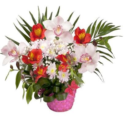 Mazzo Di Fiori Orchidee.Orchidee Invio E Consegna Di Orchidee A Domicilio In Italia