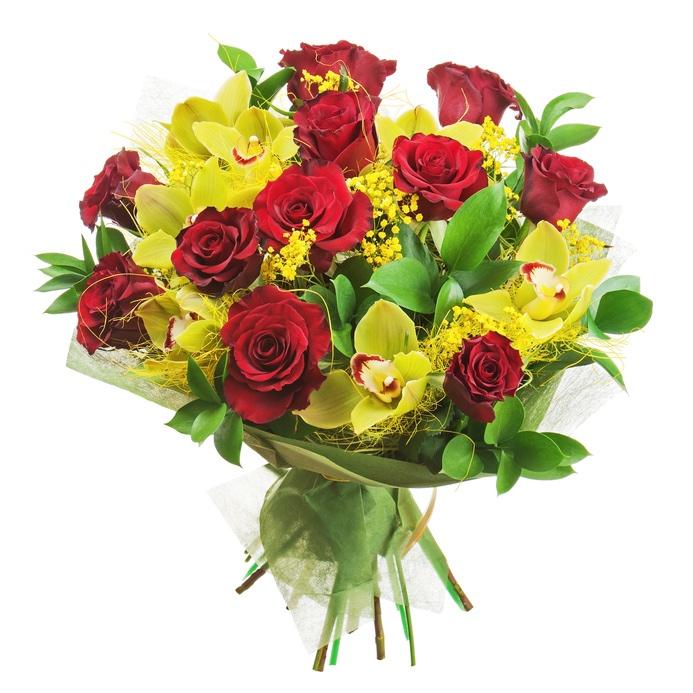Orchidee invio e consegna di orchidee a domicilio in panama for Orchidea foglie gialle