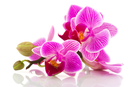 delivery orchids