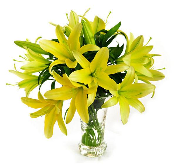 gigli gialli