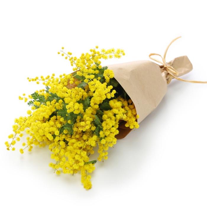 Febbraio 2016 for Mimosa in vaso